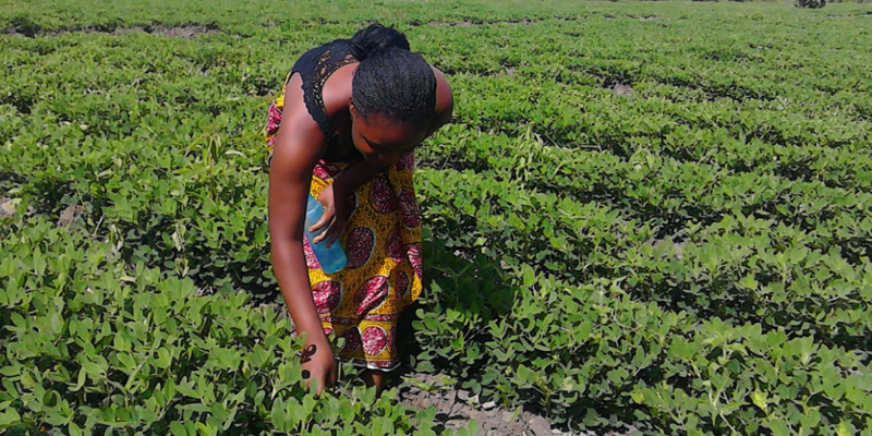 Food Security MSc to offer scholarships
